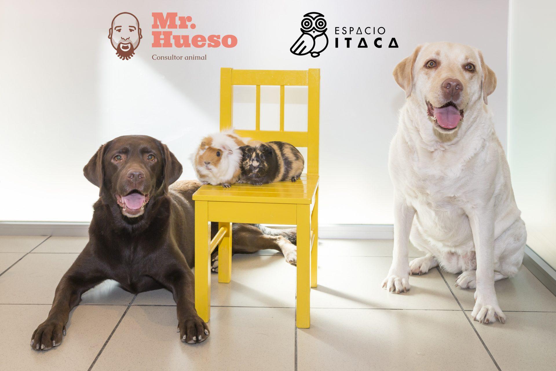 equipo de animales de Espacio Ítaca y Mr. Hueso, dos perros y dos cobayas