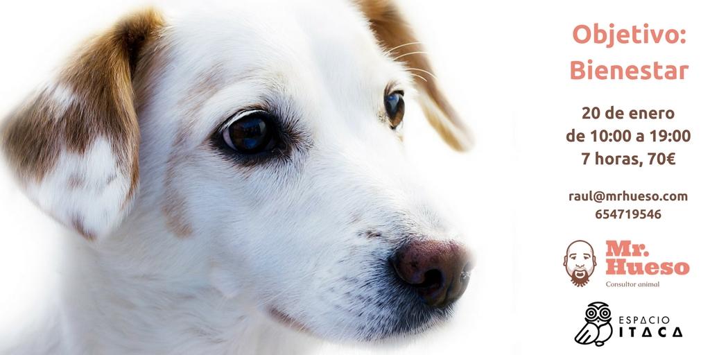 aparece un joven perro junto a la fecha y datos del curso