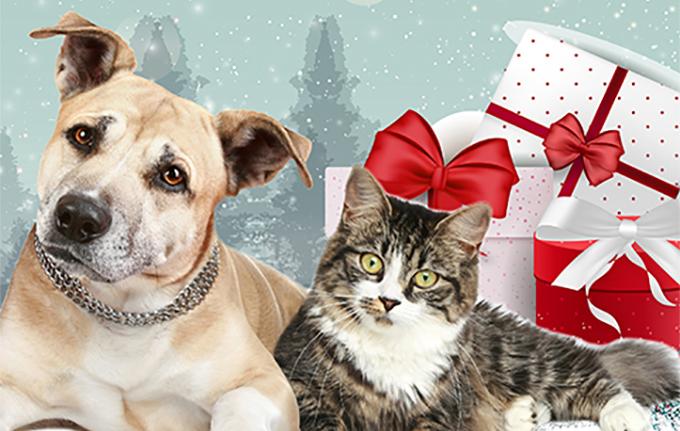 un perro, un gato y unos regalos
