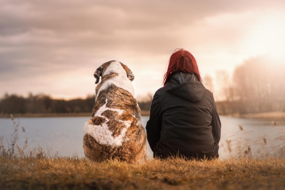 un perro y una persona mirando el paisaje