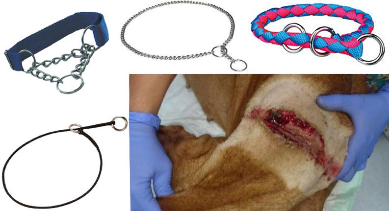 distintos collares de ahogo y un perro con herida en el cuello
