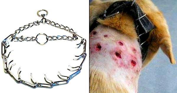 collar de pinchos y el cuello de un perro con las marcas