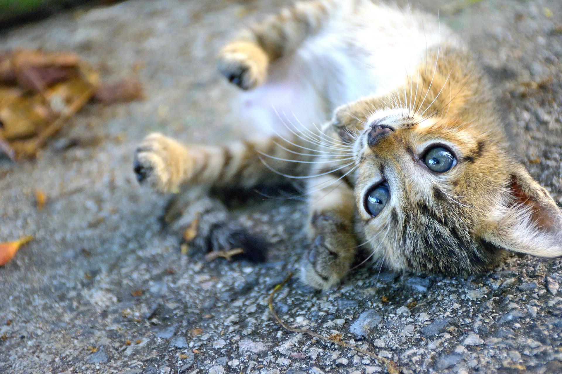 cachorro de gato tumbado en la calle