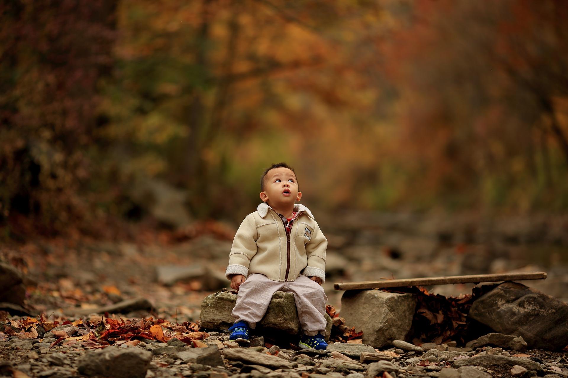 un niño en el bosque mirando hacia los árboles