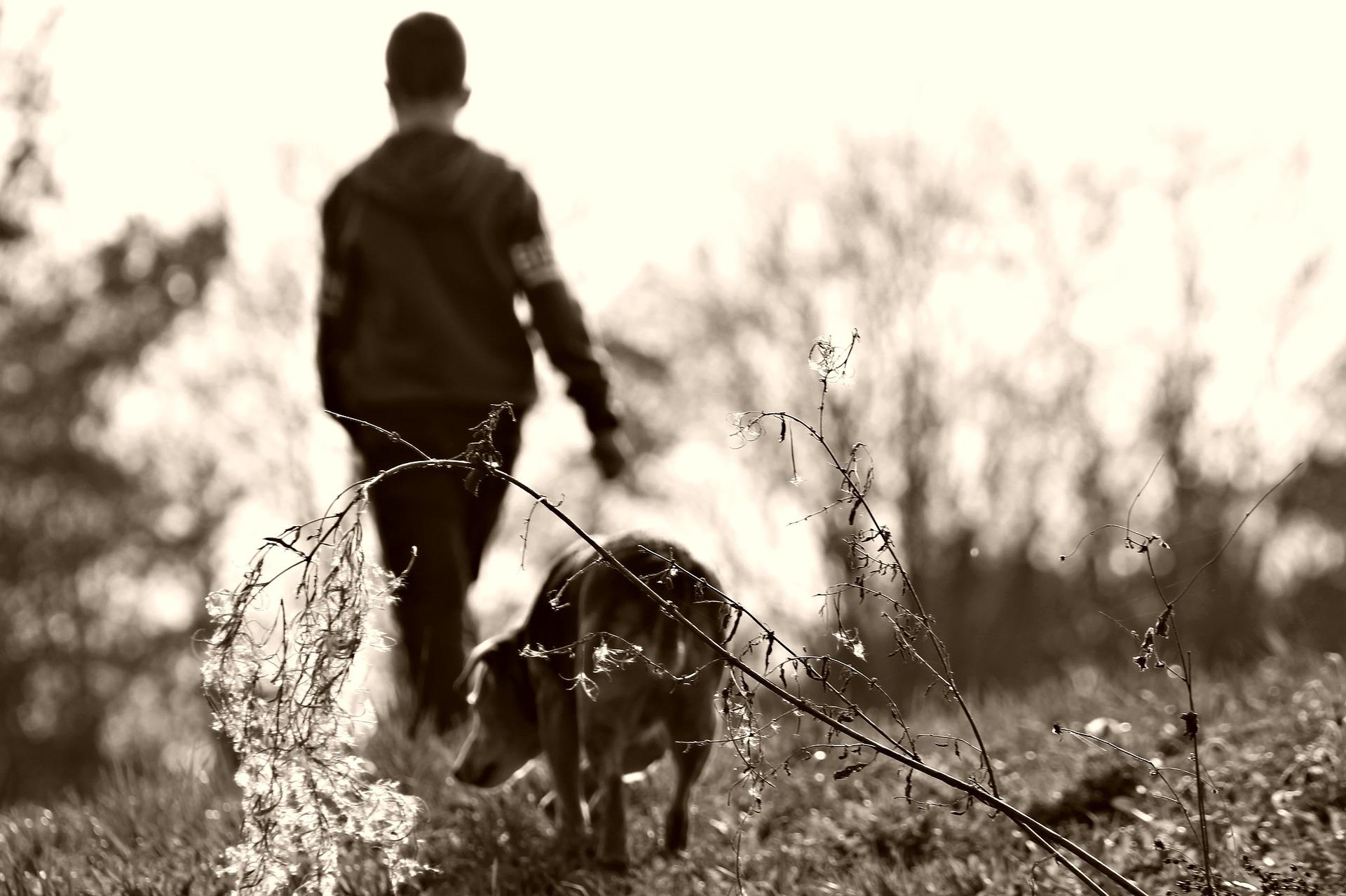 perro y niño paseando por el campo