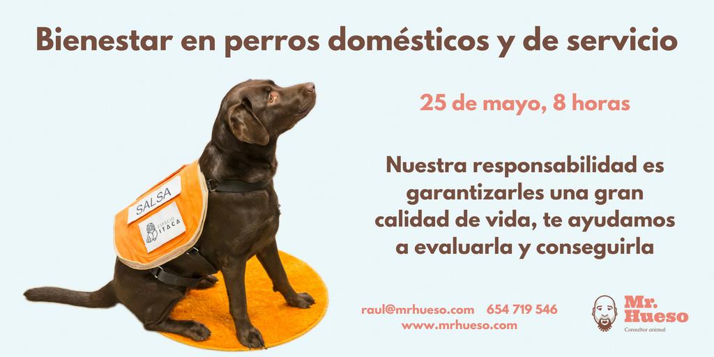 Salsa, perra de terapia de Mr. Hueso, junto a toda la información del curso
