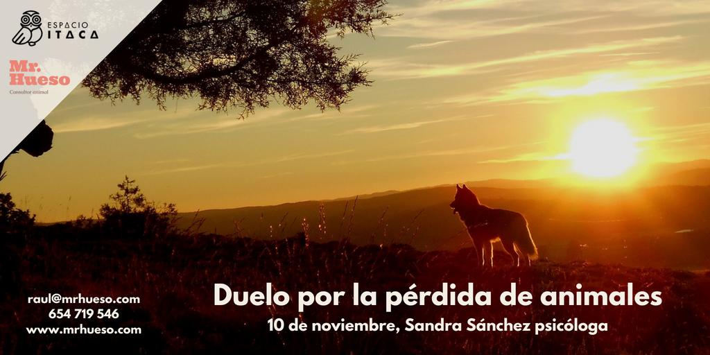 la foto es de un amanecer en la montaña y se ve un perro a contra luz