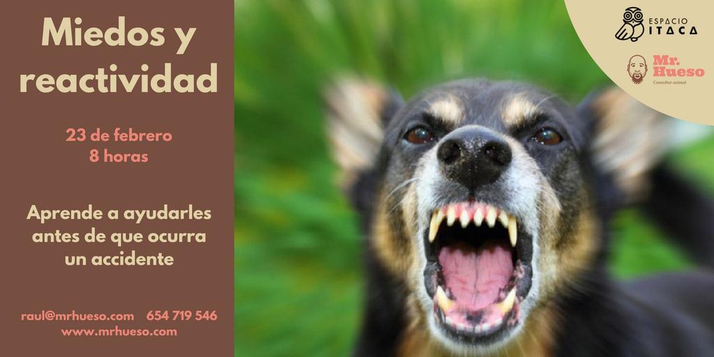una imagen de un perro con la boca abierta y enseñando los dientes