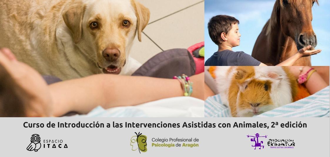 Aparecen tres interacciones con animales, un perro, un caballo y una cobaya