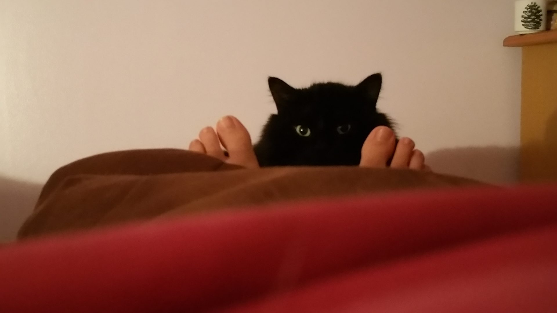 Canuto a los pies de la cama
