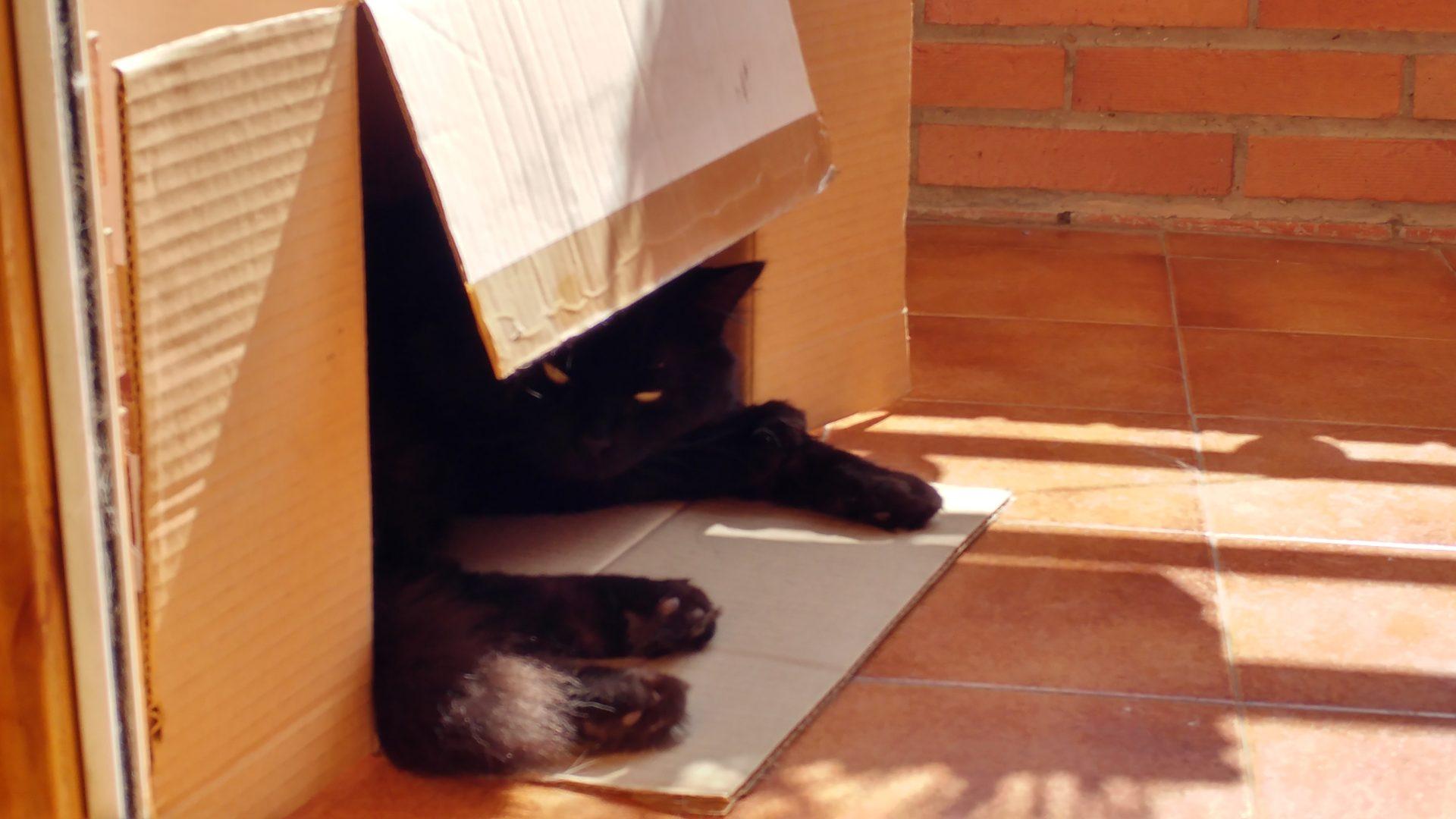 Canuto en una caja de cartón en el balcón