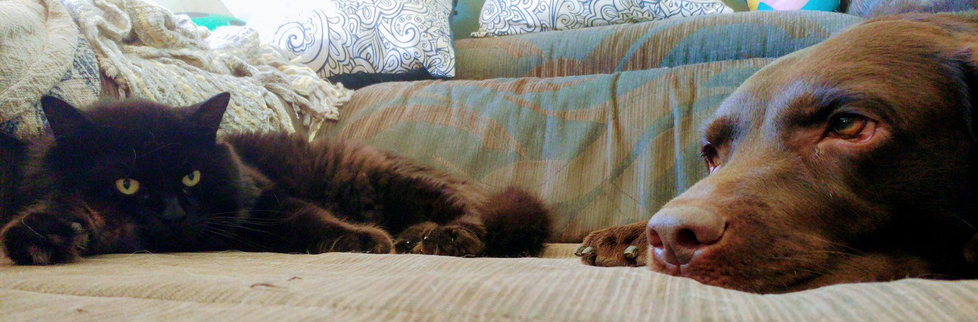 Canuto y Salsa en el sofá