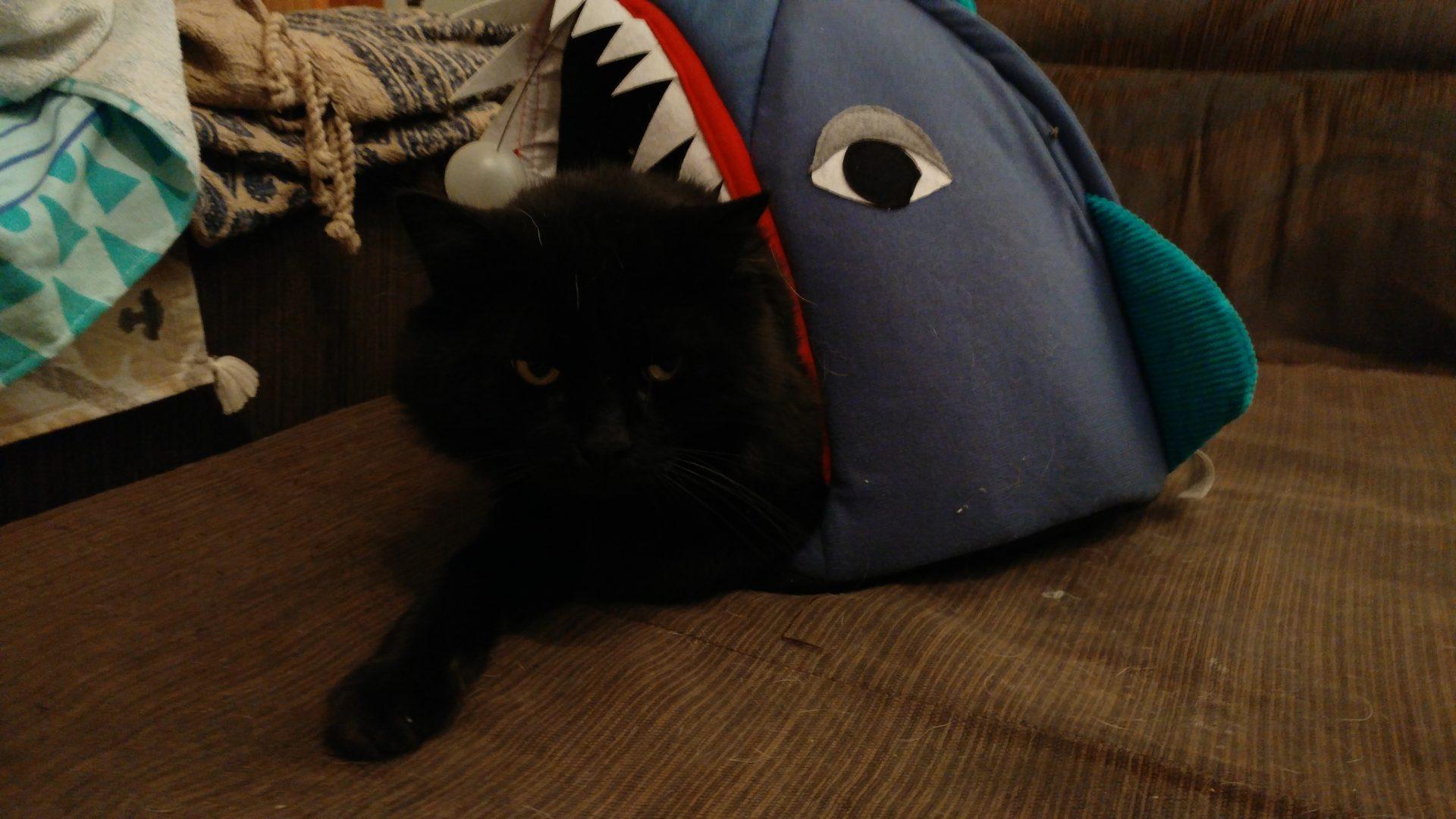 Canuto en su cama tiburón