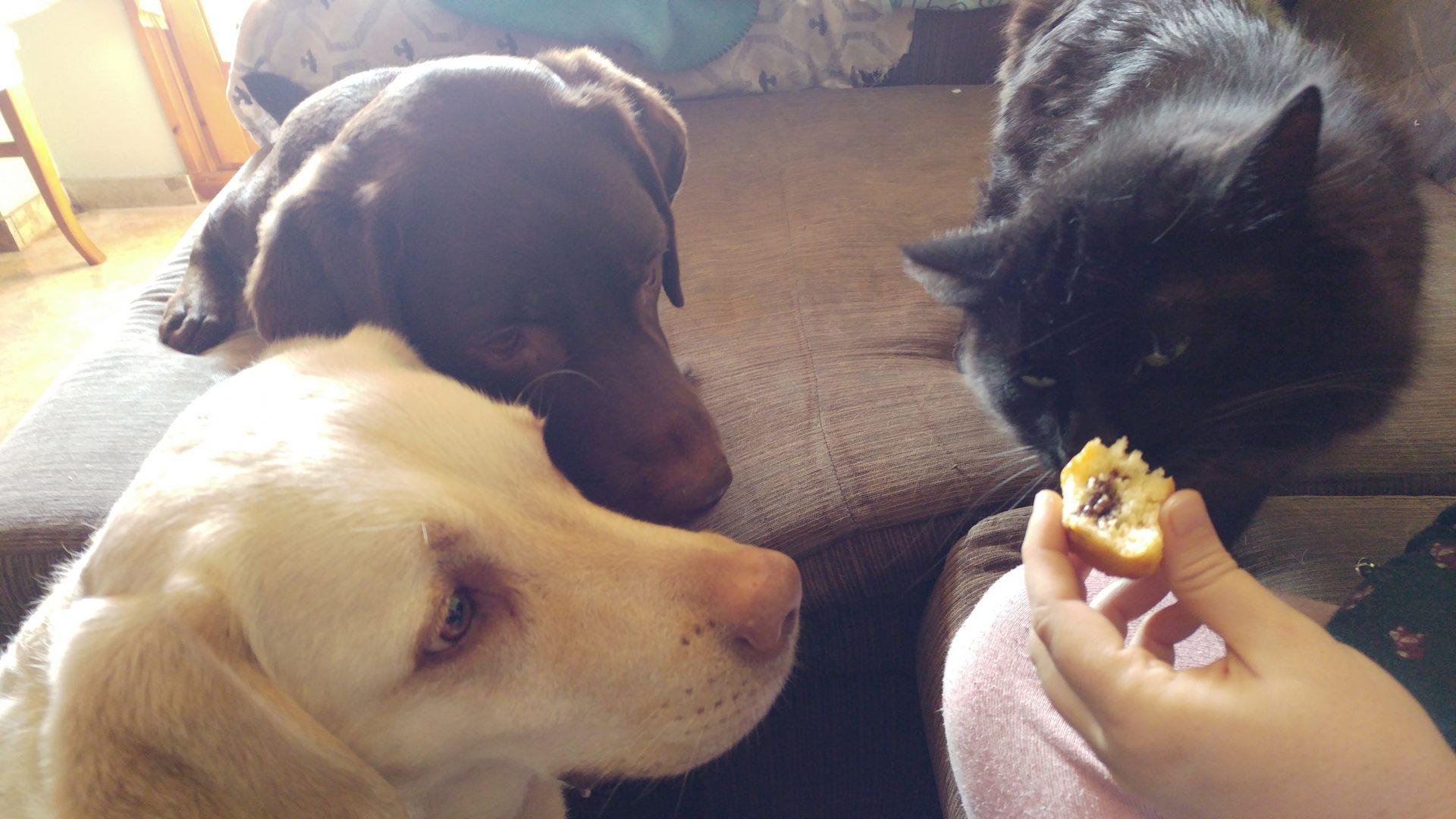 Canuto, un trozo de madalena, y Rumba y Salsa esperando su decisión