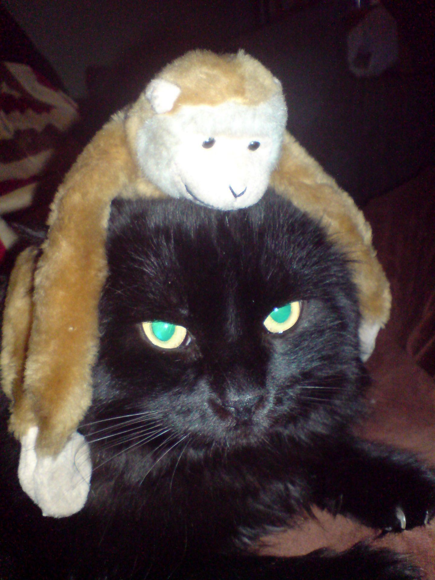 Canuto con un peluche de mono en la cabeza