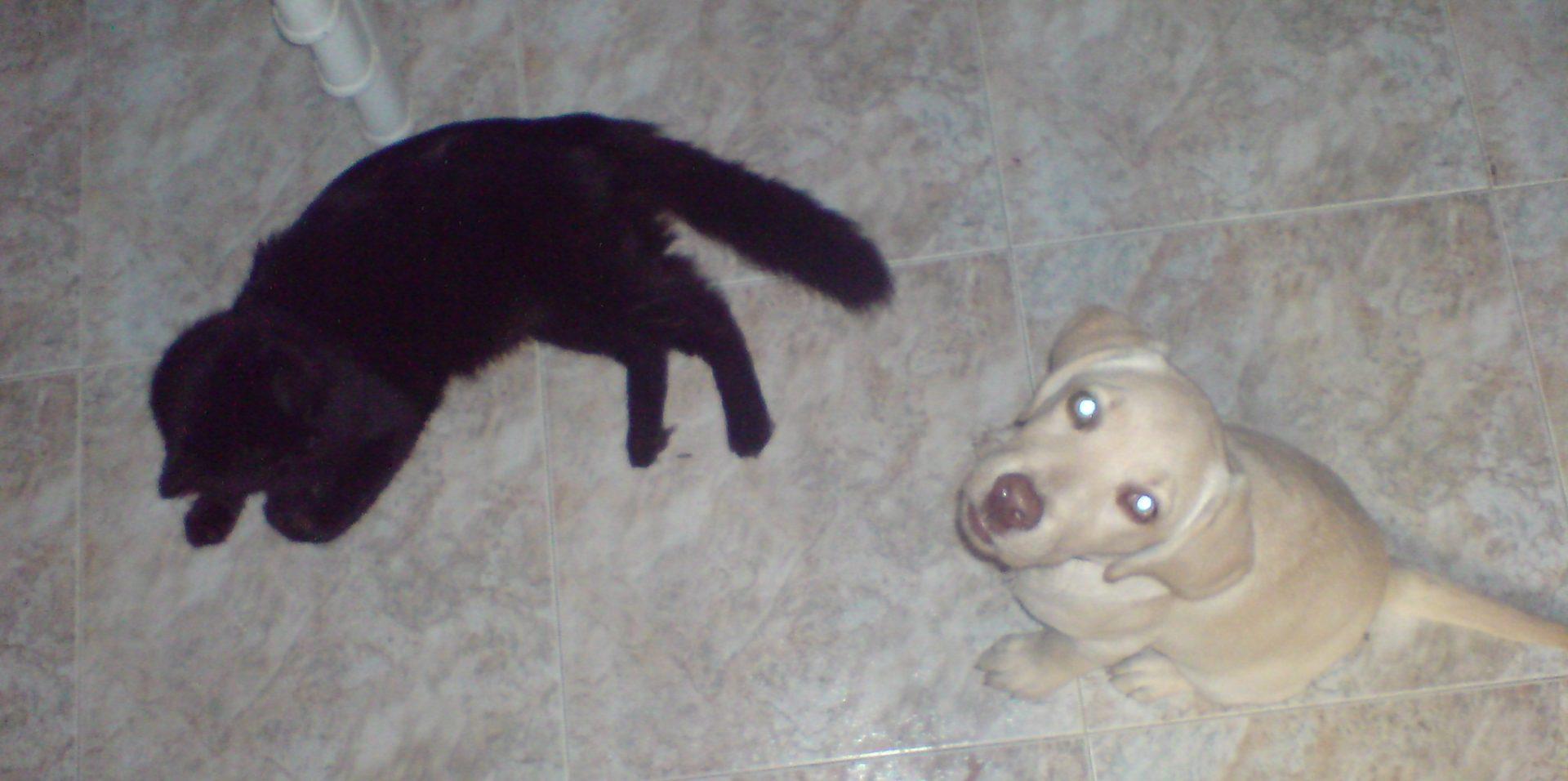 primeros días de Rumba en casa con Canuto