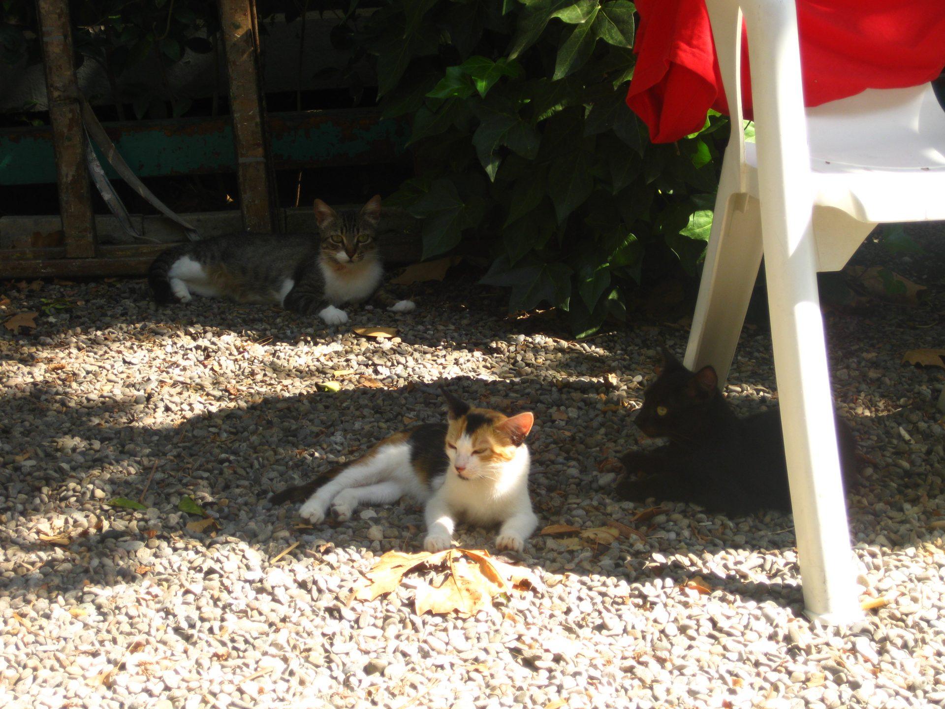 varios gatos a la sombra