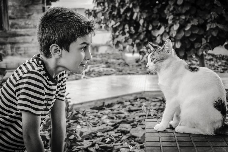 aparece un niño mirando a un gato