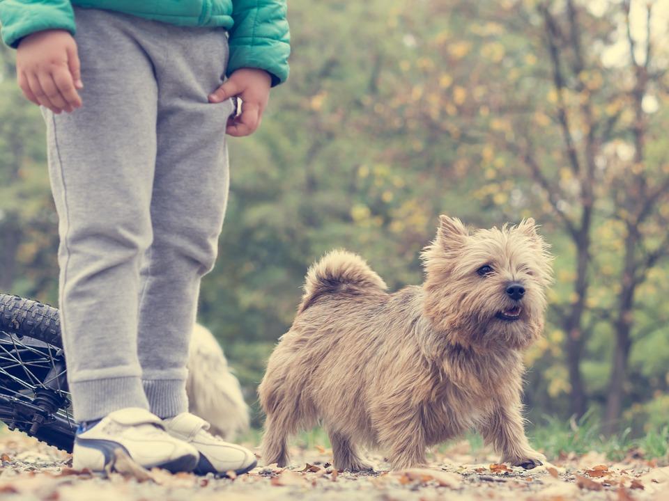 aparece un pequeño perro peludo junto a las piernas de un niño o niña