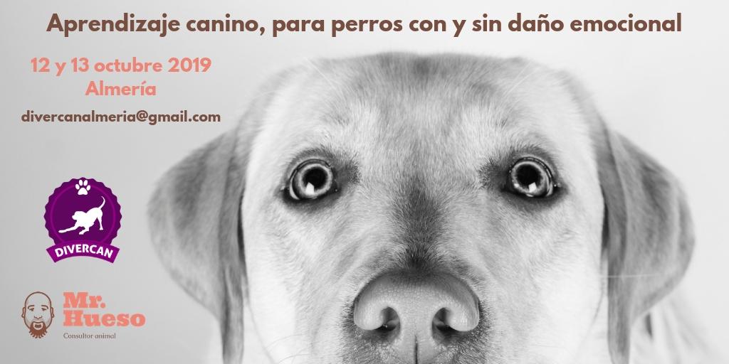Seminario de Mr. Hueso sobre aprendizaje y emociones en Almería