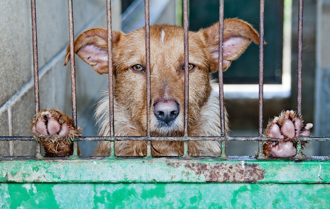 perro abandonado en un chenil