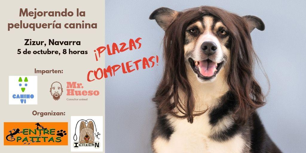 formación para profesionales de la peluquería y la educación canina realizada por Canino VI y Mr Hueso