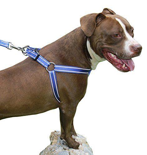 aparece un perro con un arnés de los que hay que meter las patas del perro en los huecos y un cierre en la parte superiror