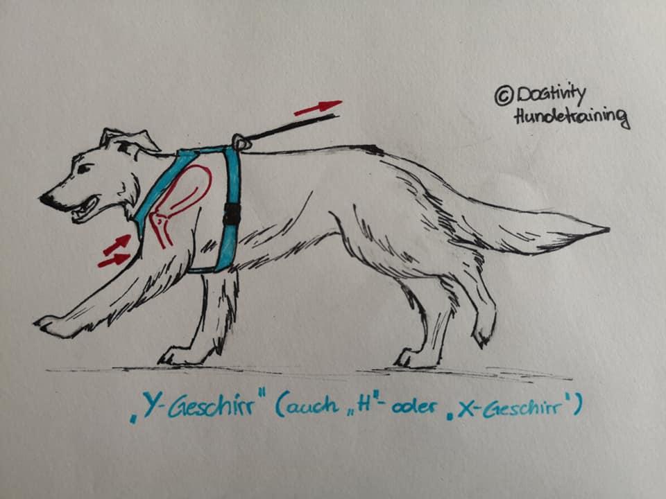 Dibujo de arnés Y o H, realizado por Dogtivity Hundetraining