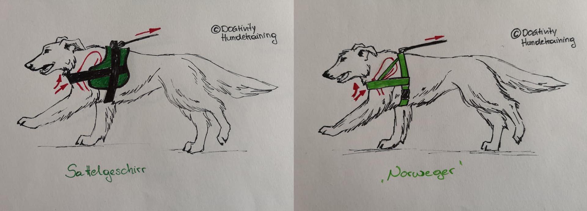 dibujos de arneses restrictivos realizados por Dogtivity Hundetraining