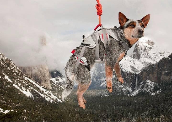 aparece un perro en el aire, siendo elevado por una cuerda unida al arnés especial