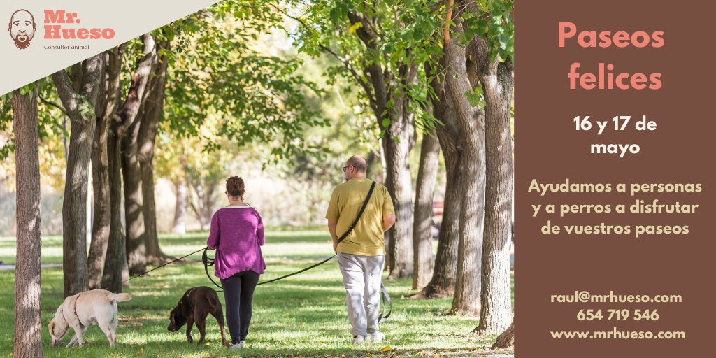 Aparecen dos personas paseando entre árboles con dos perros